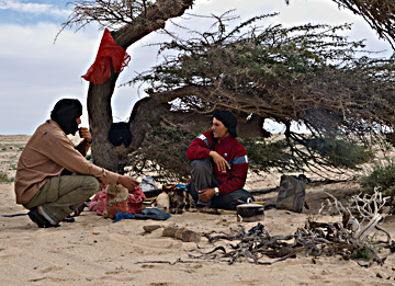 Shepherds preparing lunch—the curved trunk of an acacia tree tells of strong unidirectional winds that sweep across this part of the Sahara.